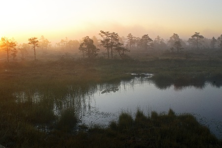 a fen in the morning