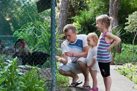 Family feeding cocks  in the zoo outdoor