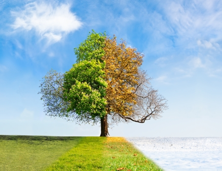 Foto de Four seasons tree time passing concept - Imagen libre de derechos