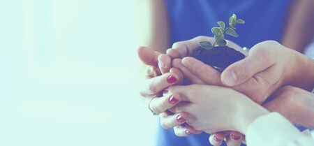 Photo pour Group of business hands holding a fresh young sprout. Symbol of growing and green business - image libre de droit