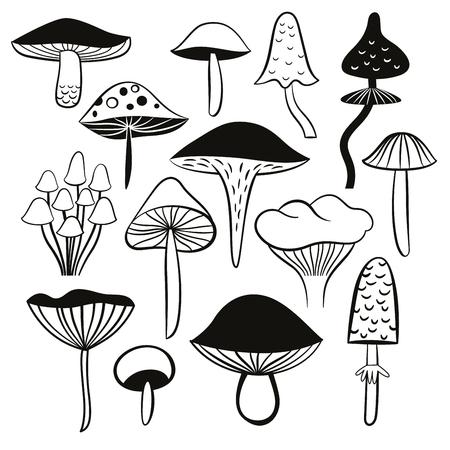 black and white mushrooms