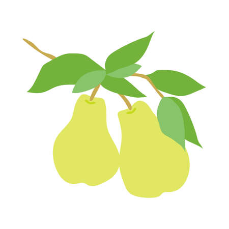 Illustration pour Fruit pear branch. Stock vector illustration isolated on white background. Hand drawn pears hanging on branch with leaves. Kitchen design decoration, food packaging, flat food illustration, fruit tree - image libre de droit