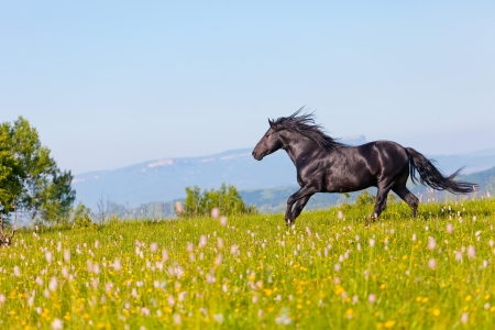 Foto de Arab racer runs on a green summer meadow - Imagen libre de derechos