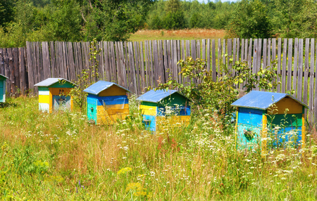 Multi-colored beehives  stand along a wooden fence of an apiary in summer day