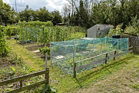 Allotment Garden where land is made available for personal cultivation of fruit and vegetables.