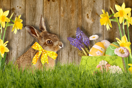 Easter bunny with bow sitting in green meadow against wood background