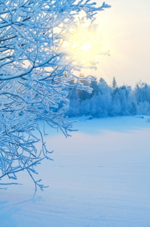 Photo for Winter Landscape - Royalty Free Image