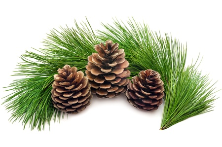Three cones with green branches on a white background
