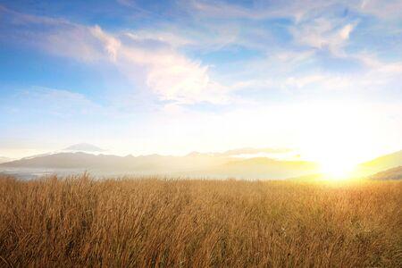 Photo pour Dry grass field with sunlight over blue sky background - image libre de droit