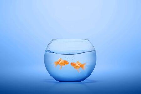 Photo pour Goldfish in the fishbowl with blue background - image libre de droit