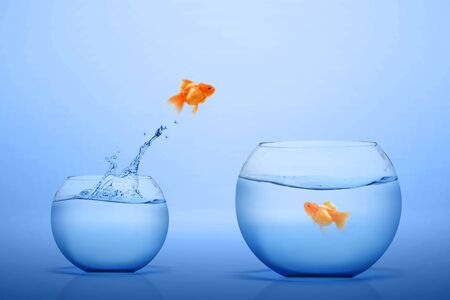 Photo pour Goldfish jumping out into a bigger fishbowl with blue background - image libre de droit