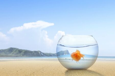 Photo pour Goldfish in the fishbowl on the sandy beach with a blue sky background - image libre de droit
