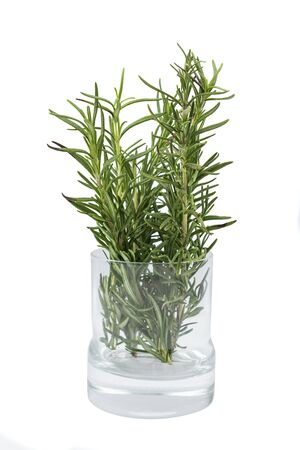 Photo for Rosemary on the glass plant pot isolated over white background - Royalty Free Image