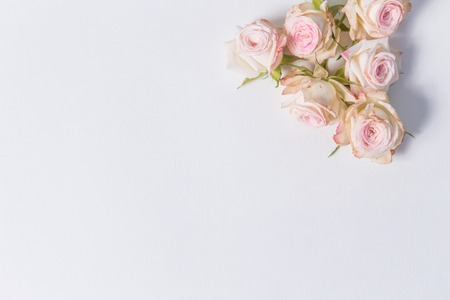 Photo pour beautiful delicate flowers spray roses on a white background in the corner with place for label, close up, top view - image libre de droit