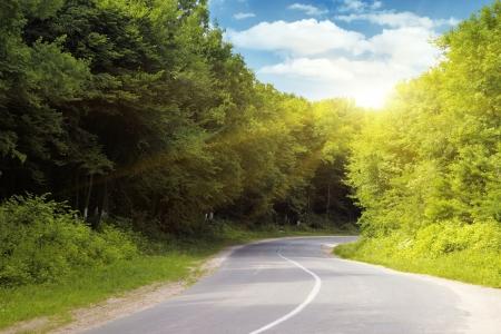 Empty asphalt road running through forest.