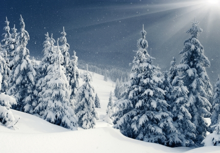 Beautiful Winter Panorama With Snow Covered Trees