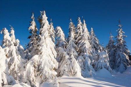 Snow Covered Trees In The Mountains