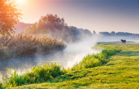 Fantastic foggy river with fresh green grass in the sunny beams. Dramatic colorful scenery. Seret river, Ternopil. Ukraine, Europe. Beauty world.の写真素材