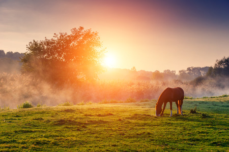 Photo for Arabian horses grazing on pasture at sundown in orange sunny beams. Dramatic foggy scene. Carpathians, Ukraine, Europe. Beauty world. - Royalty Free Image