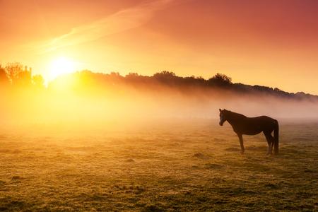 Arabian horses grazing on pasture at sundown in orange sunny beams. Dramatic foggy scene. Carpathians, Ukraine, Europe. Beauty world.