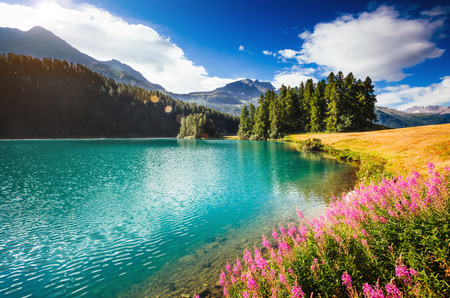 Foto per Great view of the azure pond Champfer in alpine valley. Location Swiss alps, Silvaplana village, district of Maloja, Europe. - Immagine Royalty Free