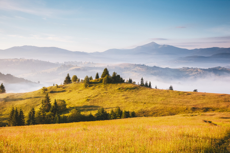 Photo pour Misty alpine highlands in sunny day. Location Carpathian national park, Ukraine, Europe. Picture of wild area. Scenic image of hiking concept. Superb tourism wallpapers. Explore the beauty of earth. - image libre de droit
