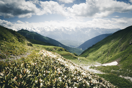 Photo pour Alpine meadows with rhododendron flowers at the foot of Ushba. Location Upper Svaneti, Georgia country, Europe. Caucasian ridge. Scenic image of lifestyle hiking concept. Explore the beauty of earth. - image libre de droit