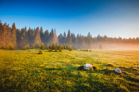 Photo pour Misty morning pasture in the sunlight. Locations place Durmitor National park, village Zabljak, Montenegro, Balkans, Europe. Attractive picture of a countryside. Discover the beauty of earth. - image libre de droit