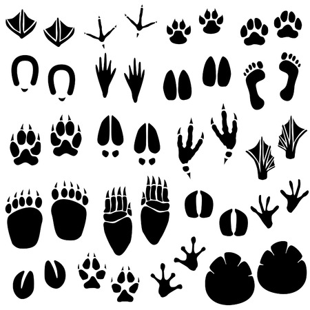Illustration for Animal Footprint Track Vector - Royalty Free Image