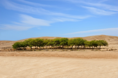 A beautiful oasis in a desert and blue sky with clouds