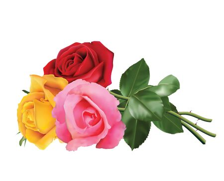 Illustration pour Three beautiful roses, pink, red and yellow, isolated on white background. - image libre de droit