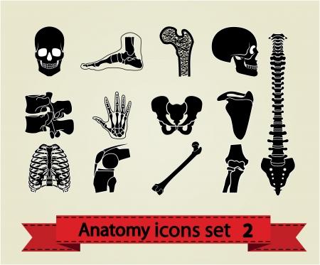 Human anatomy icons parts