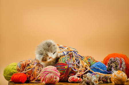 Cute kitten playing with balls of knitting wool yarn on orange background. Cute little kitten. Baby cat playing with ball of yarn on light background