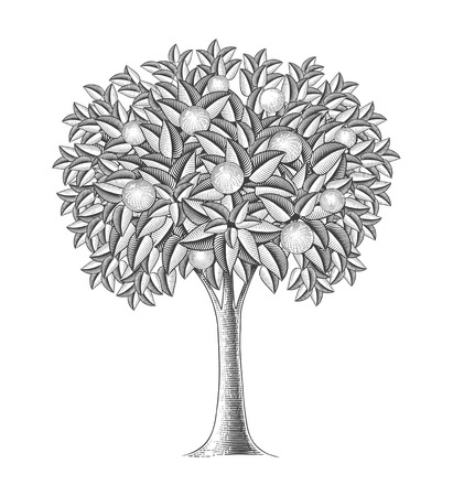 Fruit tree in engraving style