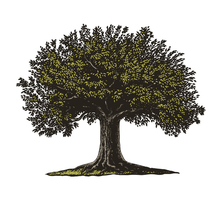 Vector illustration of a fruit tree in vintage engraving style. Isolated, Group transparent background.