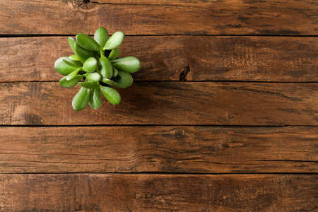 Photo for Small green plant on vintage wooden table with copyspace. Top view - Royalty Free Image
