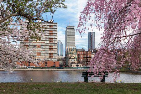 Photo pour Cherry Blossom in Boston - image libre de droit