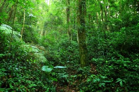 Emerald Jungle