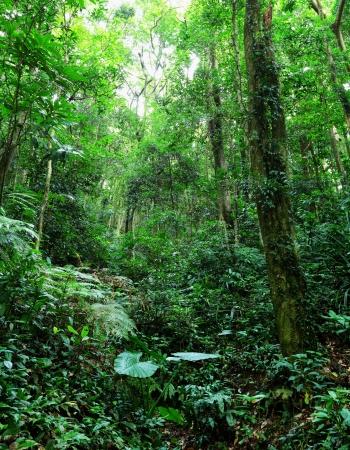 Rainforest Overgrowth
