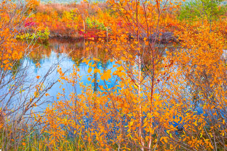 Photo pour Autumn forest near the blue river. Trees with crumbling leaves in the north of Russia. - image libre de droit