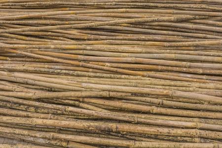 Texture, background. Yellow bamboo.