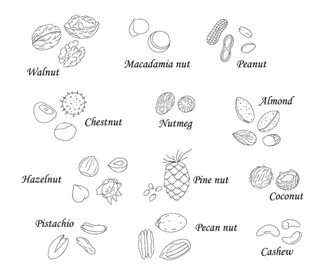 Illustration for Vector set of black and white nuts. Collection of  isolated monochrome hazel nut, walnut, pistachio, peanut, almond, coconut, pecan, pine nut, macadamia, cashew. Food illustration in cartoon or doodle style isolated on white - Royalty Free Image