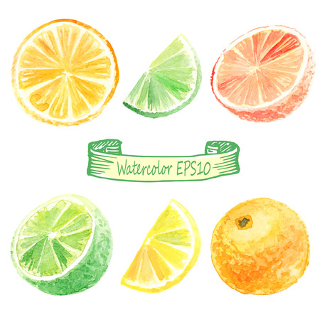 hand drawn watercolor illustration. Citrus set. orange, lime, lemon, grapefruit