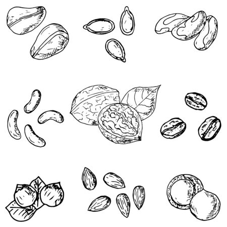 Illustration pour Set of hand-drawn nuts and seeds. Vector cartoon illustrations. - image libre de droit