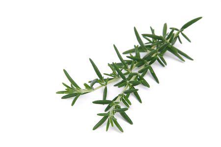 Rosemary 08