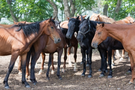 Herd of horses under the shade of trees on a hot day