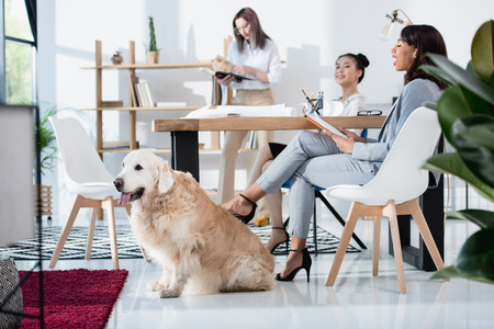 Photo for multiethnic women in formal wear working at office with dog - Royalty Free Image