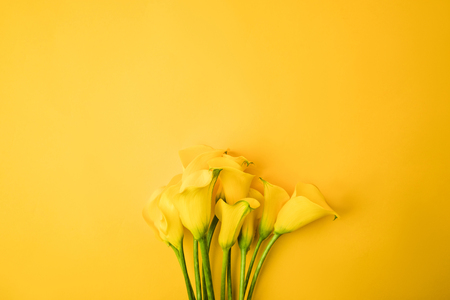 Photo pour close-up view of beautiful yellow calla lily flowers isolated on yellow - image libre de droit