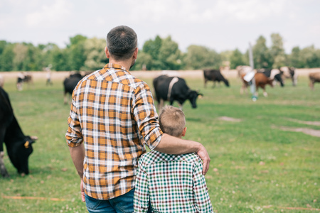 Photo pour back view of father and son standing together and looking at cows grazing on farm - image libre de droit