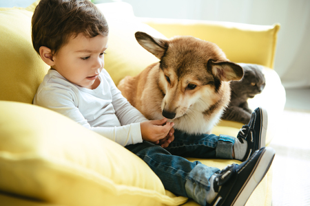 Photo for adorable boy sitting on sofa with cat and dog - Royalty Free Image